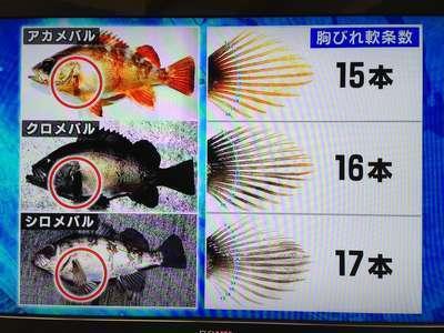 150226�Amebaru_munabire_nannjousuu.JPG